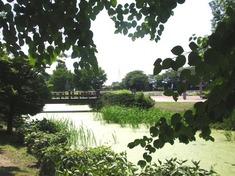 240608-230e 別所沼公園.jpg