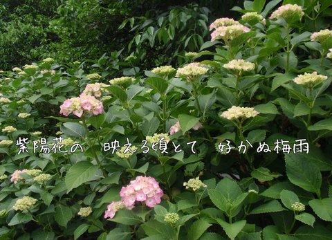 240613-29a 桂木.jpg
