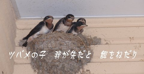 240714-01 JA鳩山.JPG