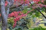 241111-248a 鎌北湖.jpg.jpg