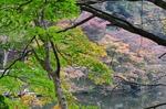 241111-258a 鎌北湖.jpg