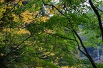 241111-259a 鎌北湖.jpg.jpg