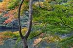 241111-271 鎌北湖.jpg