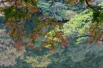 241111-278 鎌北湖.jpg