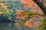241111-292 鎌北湖.jpg