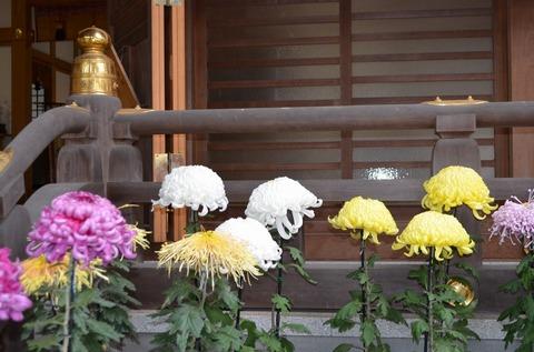 241123-140 大宮住吉神社.jpg
