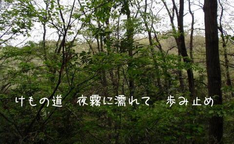250514-52b けもの道.jpg