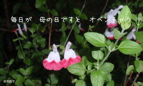 250519-164b.jpg