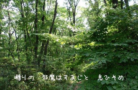 250521-03a 裏山.jpg