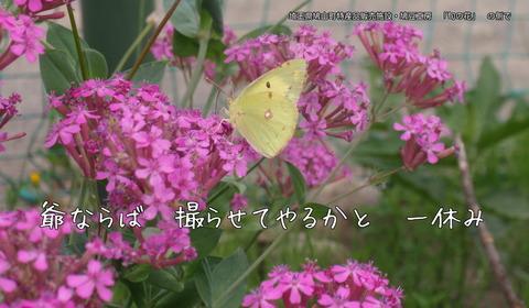 250528-04b 旬の花.jpg
