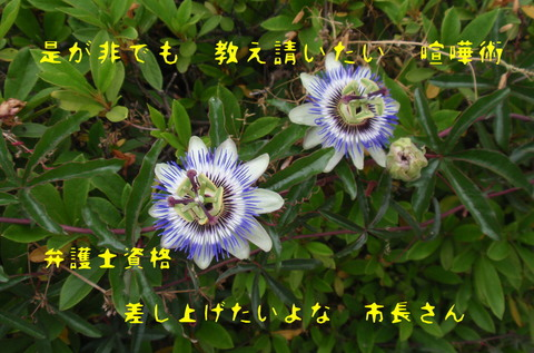 250530-01a 花いっぱい.jpg