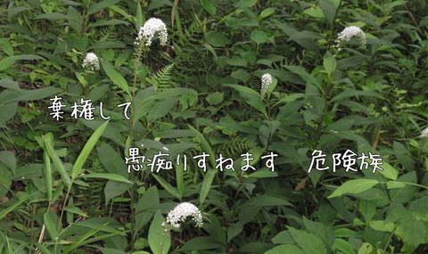 250624-17a 石坂.jpg