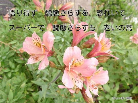 250628-01 花いっぱい.jpg