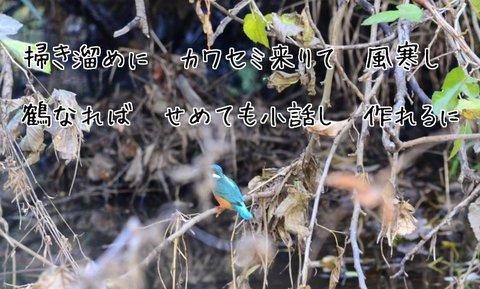 251126-07b カワセミ.jpg