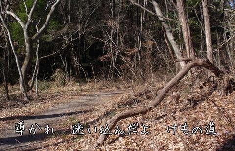 260114-49 石坂の森.jpg