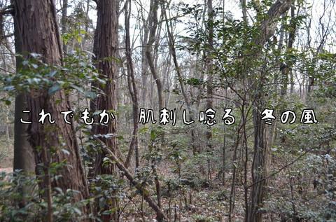 260117-61b 石坂の森.jpg