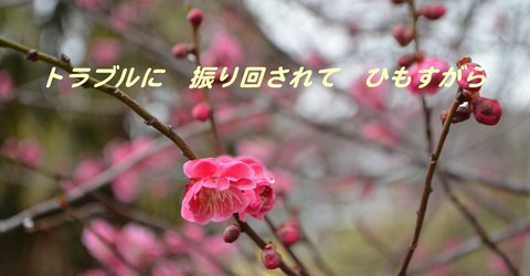 260302-04a 鳩山.jpg