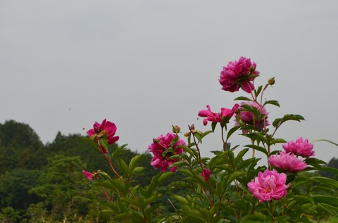 260522-38a 宮沢湖.jpg
