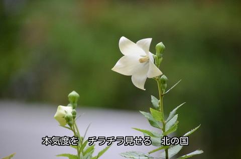 260707-01s.jpg