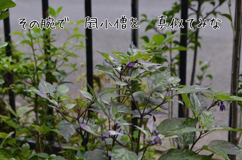 260910-008a 自宅庭.jpg