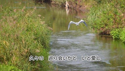 260925-82s 鳩川.jpg