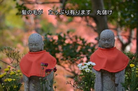 261117-308v 安楽寺.jpg