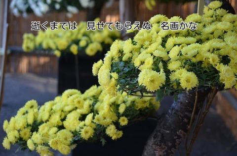 261123-364s 喜多院.jpg