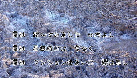 261219-02b 霜柱.jpg