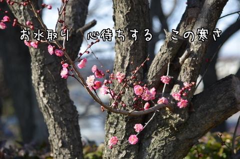 270209-27a 鳩山.jpg
