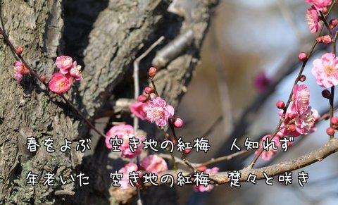 270209-29a 鳩山.jpg