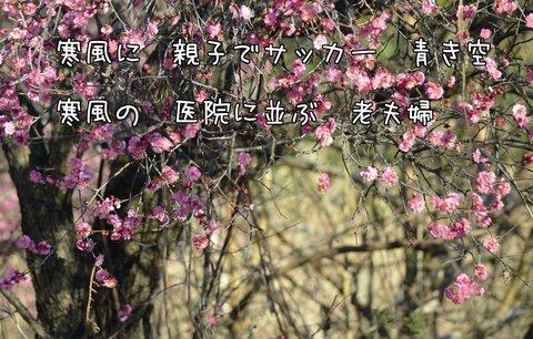 270209-56a 鳩山.jpg