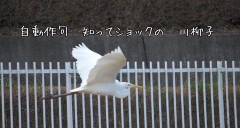 270220-196a 鳩川.jpg