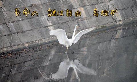 270303-165a 鳩山.jpg