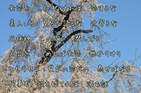 270329-51b 喜多院.jpg