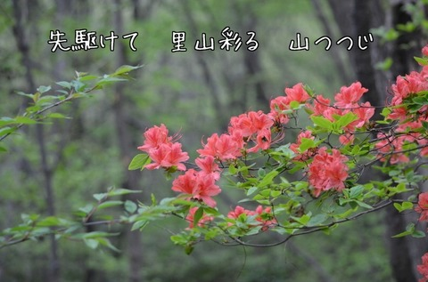 270416-67m 石坂の森.jpg