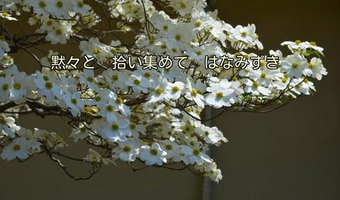 270422-193s 花水木.jpg