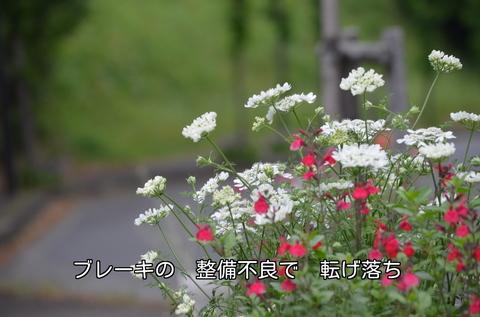270512-361s 散歩道.jpg