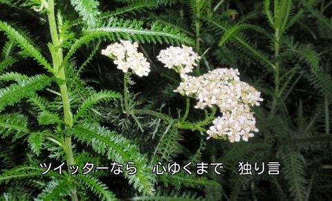 270624-105s 農村公園.jpg