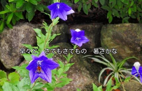 270705-24s 松が丘.jpg