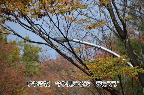 271115-134t けやき坂.jpg