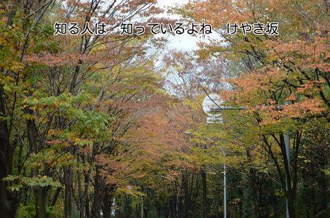271115-136s けやき坂.jpg
