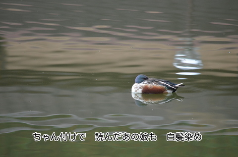 271115-166p 農村公園.jpg