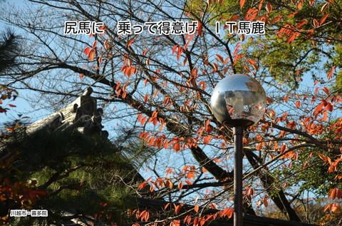 271122-231s 喜多院.jpg