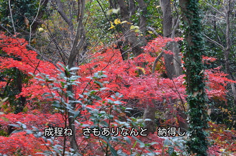 271210-112s 物見山.jpg