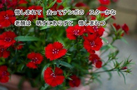 271218-2s.jpg