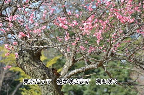 280222-384e 東京.jpg