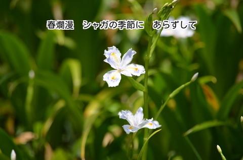 280406-631e 慈光寺.jpg