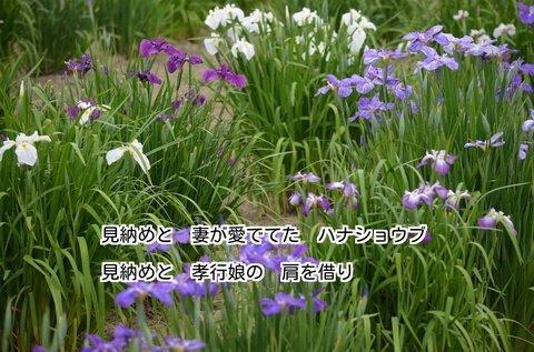 280604-312s ときがわ菖蒲園.jpg