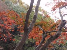 231118-03 鎌北湖.jpg