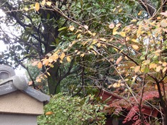 231120-30 川越市中院.jpg